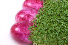 Easter eggs with cress Stock Photo