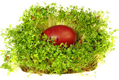Easter eggs and cress Royalty Free Stock Photos