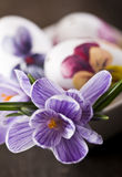 Easter eggs and crocus Stock Image