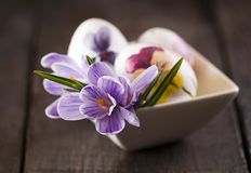 Easter eggs and crocus Royalty Free Stock Photos