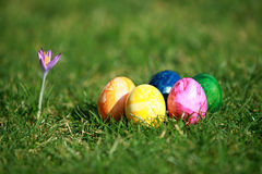 Easter eggs and crocus Stock Photography
