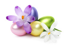 Easter eggs and crocus flowers Stock Image