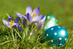 Easter eggs with crocuses. With nature background Royalty Free Stock Images