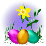 Easter eggs and daffodil Royalty Free Stock Images