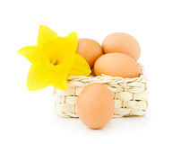 Easter Eggs with daffodil Stock Image