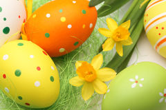 Easter eggs and daffodil Royalty Free Stock Photography
