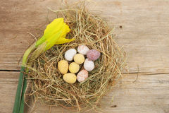 Easter eggs and daffodil flower Royalty Free Stock Photos