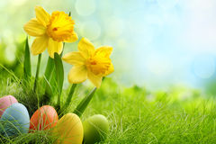 Easter. Eggs and daffodil flower on meadow stock photo
