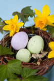 Easter eggs and daffodils stock photo