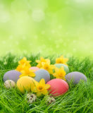 Easter eggs and daffodils flowers in grass Stock Photos
