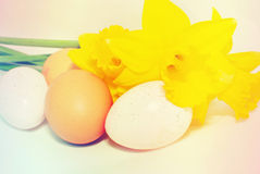 Easter eggs and daffodils. Isolated Easter eggs and yellow daffodils royalty free stock images