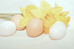 Easter eggs and daffodils. Isolated Easter eggs and yellow daffodils stock photos