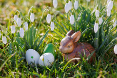 Easter eggs and daffodils outdoor Stock Photo