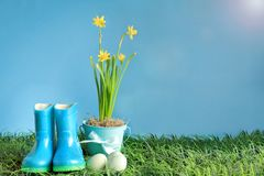 Easter Eggs with Daffodils and Rubber Rain Boots. Natural Easter eggs, rubber rain boots and yellow daffodil flowers in grass against a blue background with room stock photos