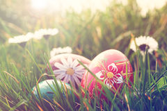 Easter eggs and daisies in the grass royalty free stock photo