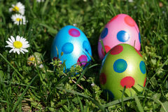 Easter eggs and daisy flowers in grass meadow Royalty Free Stock Photos
