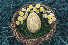 Easter eggs with daisy. On fresh green grass on nest Royalty Free Stock Photos