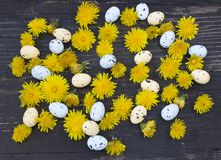 Easter eggs and dandelion Stock Photography