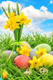 Easter eggs decoration and daffodils flowers. Blue sky with lens royalty free stock photo
