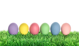 Easter eggs decoration in green grass on white background Stock Image