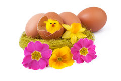 Easter Eggs Decoration Nest Yellow Chicks Stock Photos