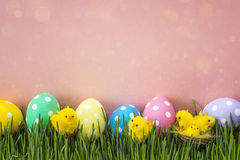 Easter eggs with decorative chicken in fresh green grass on pink Royalty Free Stock Images