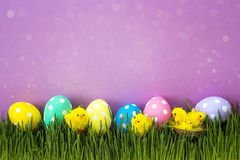 Easter eggs with decorative chicken in fresh green grass on purp Stock Photo