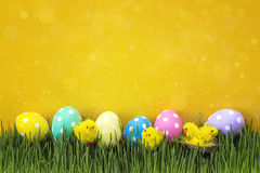 Easter eggs with decorative chicken in fresh green grass on yell Royalty Free Stock Image