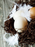 Easter Eggs with Delicate Feathers in a Nest Royalty Free Stock Photography
