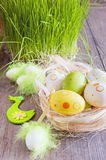 Easter eggs of different colors lying on the table next to the green fresh grass Stock Photography