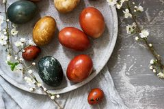 Easter eggs dyed with natural dyes, cabbage, chamomile, hibiscus and onion peel. royalty free stock photos