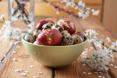 Easter eggs dyed with onion peels and quail eggs in a bowl royalty free stock photography