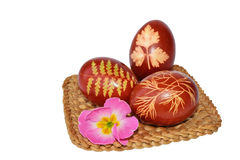 Easter eggs dyed with onion skin Stock Photos