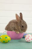 Easter eggs and Easter bunny sitting in a cup Stock Photography