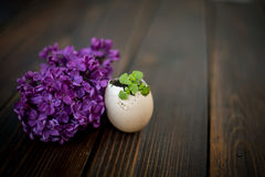 Easter eggs. Egg-shell with lilac and basil Royalty Free Stock Photography