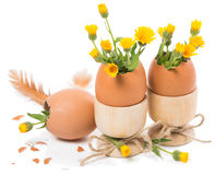 Easter eggs in eggcups. Eggshells decorated yellow flowers  in a wooden eggcups on white Stock Images