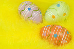 Easter eggs on feather nest royalty free stock images