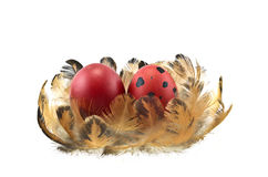 Easter eggs on feathers Stock Image