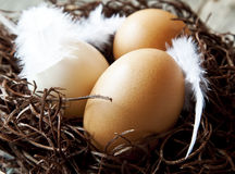 Easter Eggs with Feathers in a Nest Stock Images