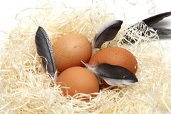 Easter egg food and ritual symbol. Easter eggs with feathers in a nest of wood on a white background stock images