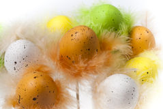 Easter eggs with feathers on white horizontal. Easter eggs with feathers on white background isolated Royalty Free Stock Images