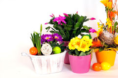 Easter eggs flower arrangements Stock Photos