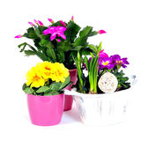 Easter eggs flower arrangements Royalty Free Stock Image
