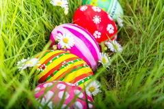 Easter Eggs with flower on Fresh Green Grass Royalty Free Stock Image