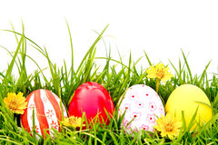 Easter Eggs with flower on Fresh Green Grass. Royalty Free Stock Photo