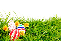 Easter Eggs with flower on Fresh Green Grass. Stock Photo