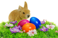 Easter eggs on flower meadow Stock Photo