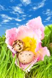 Easter eggs in flower of tulip Stock Image