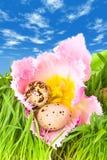 Easter eggs in flower of tulip stock image