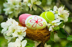 Easter eggs in the flowering garden Stock Photography